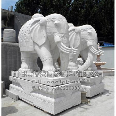 大象 (7)